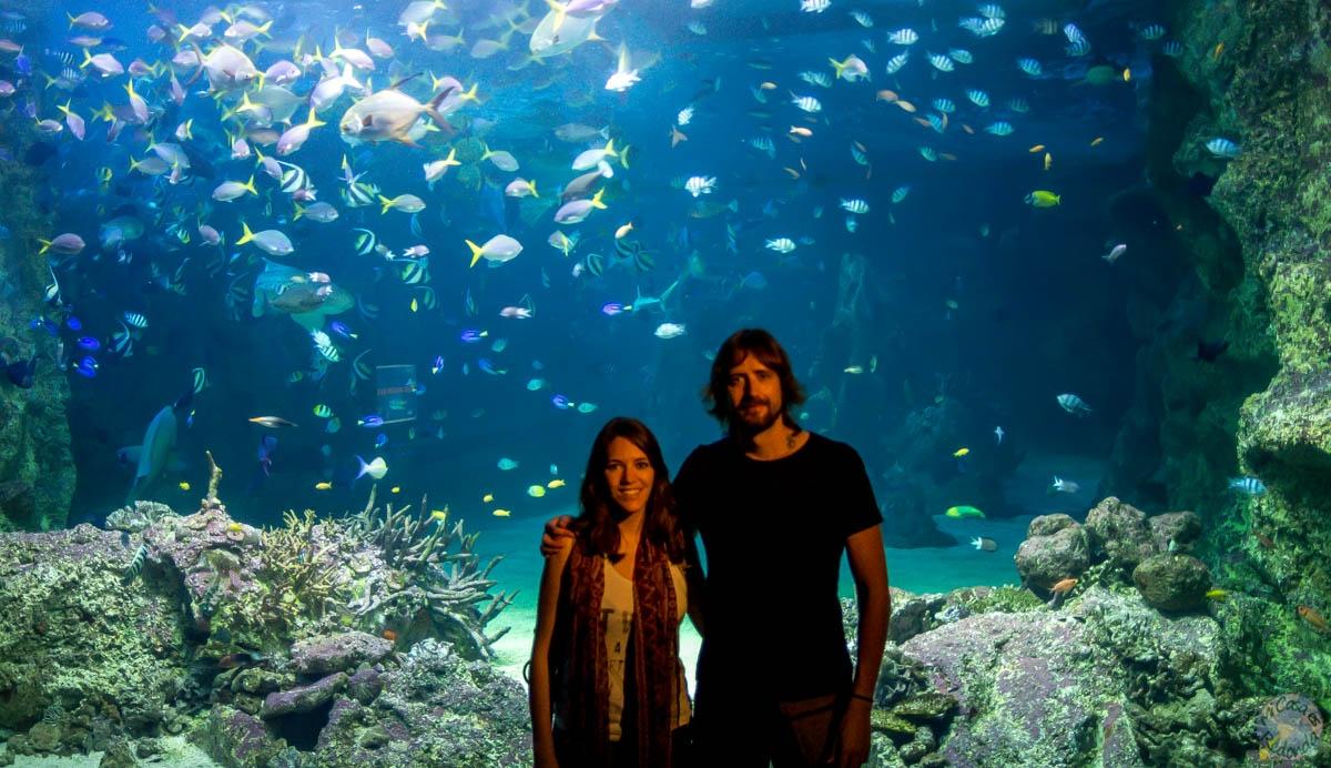 Debajo del agua y sin despeinarnos! (acuario de Sydney)