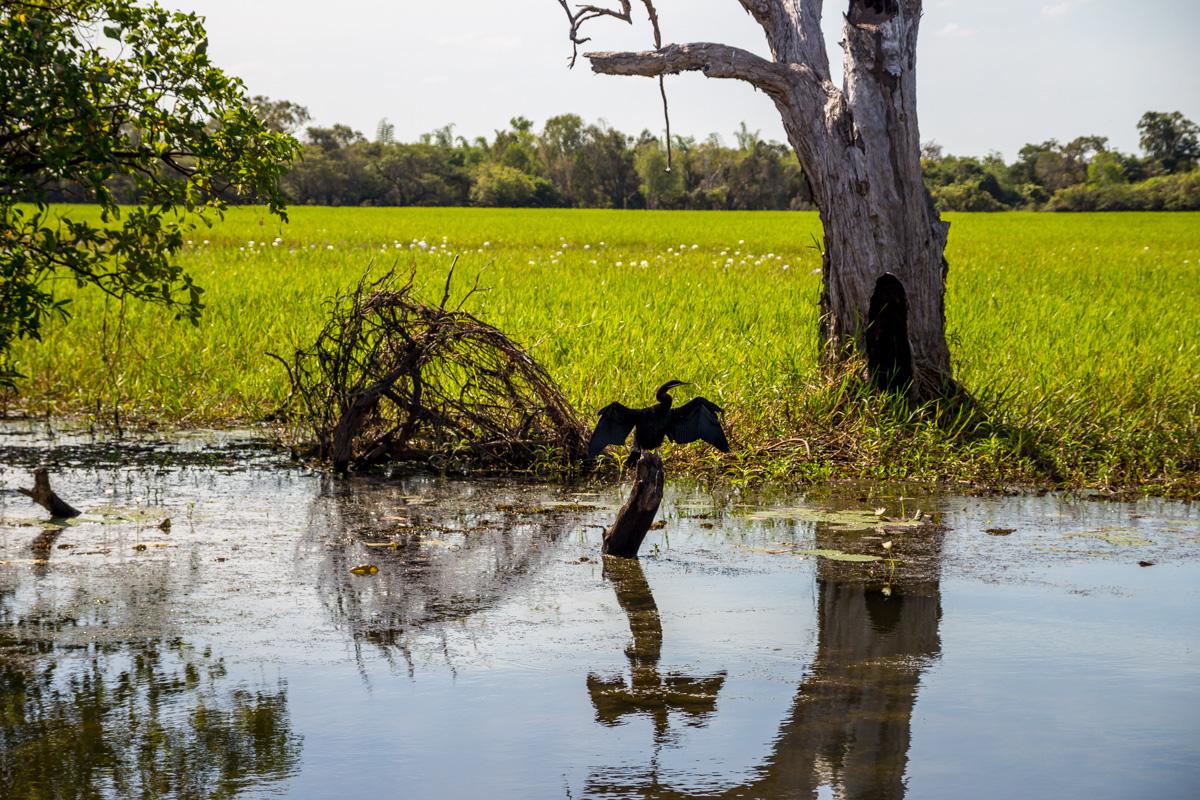 Las aves también posan, Kakadu National Park