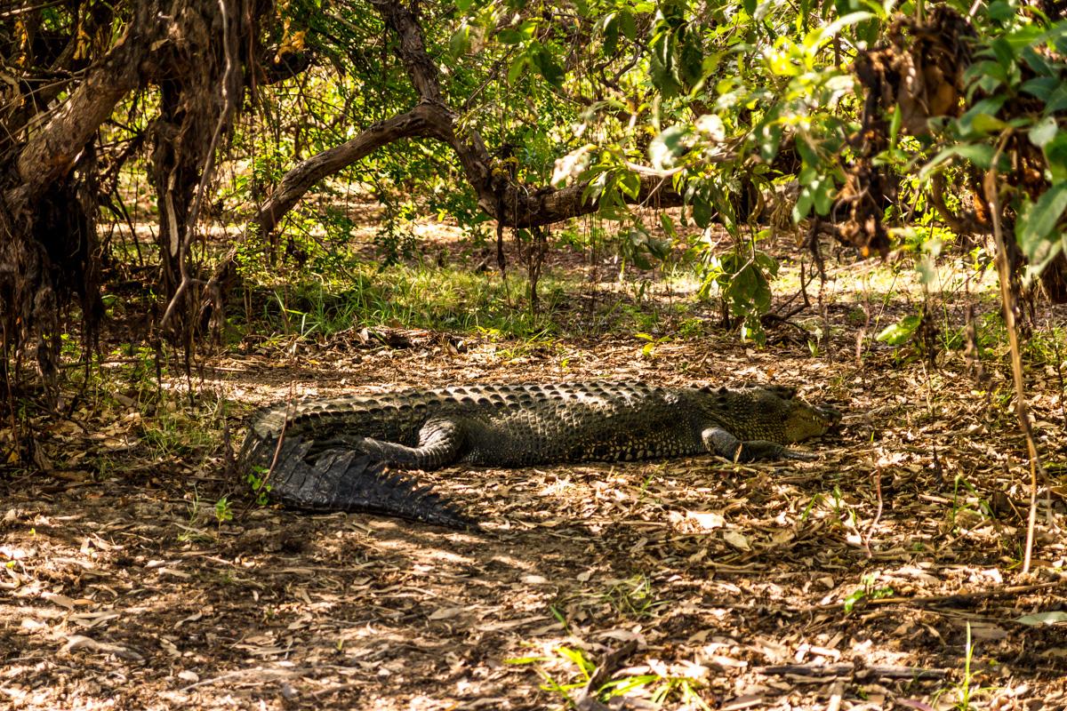 Demasiado grandes para pasear con ellos, Kakadu National Park