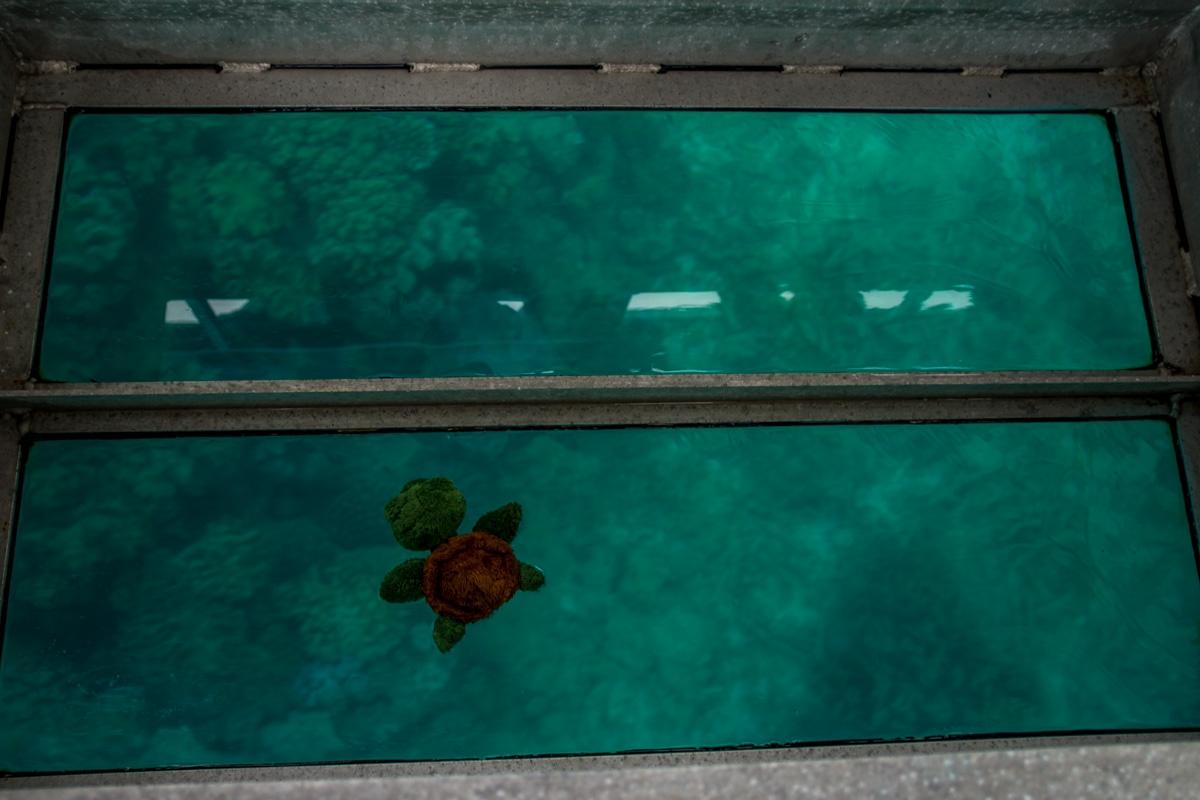 La única tortuga que vimos, Gran Barrera de Coral