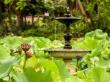 Jardín Botánico, Sydney