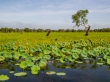 Flora del Kakadu National Park