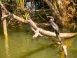 Sobrevive a los cocodrilos, Kakadu