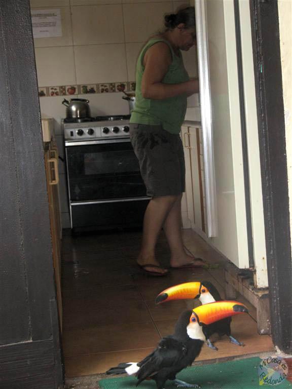 Hermanos tucanes en mi hostel!! Los adoro!