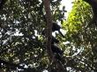 Tucanes, el Pantanal