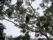 Monos, el Pantanal