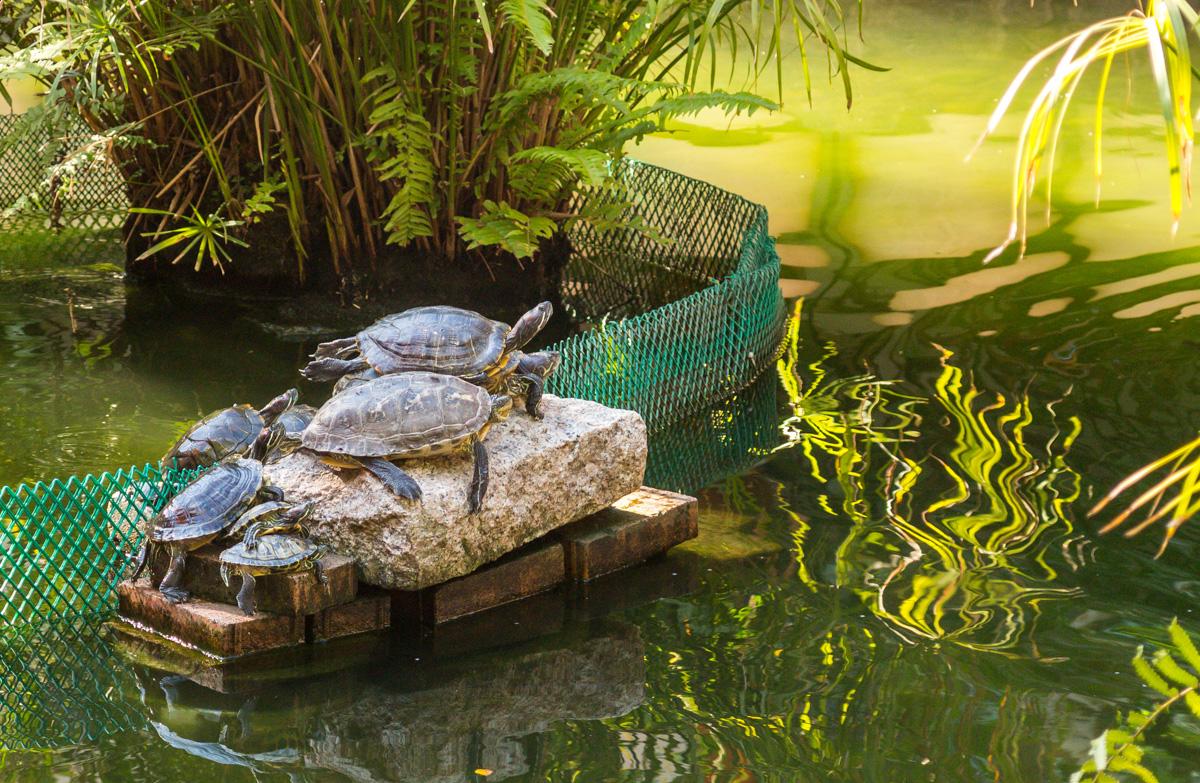 Tortugas buscando aire, parques de Hong Kong