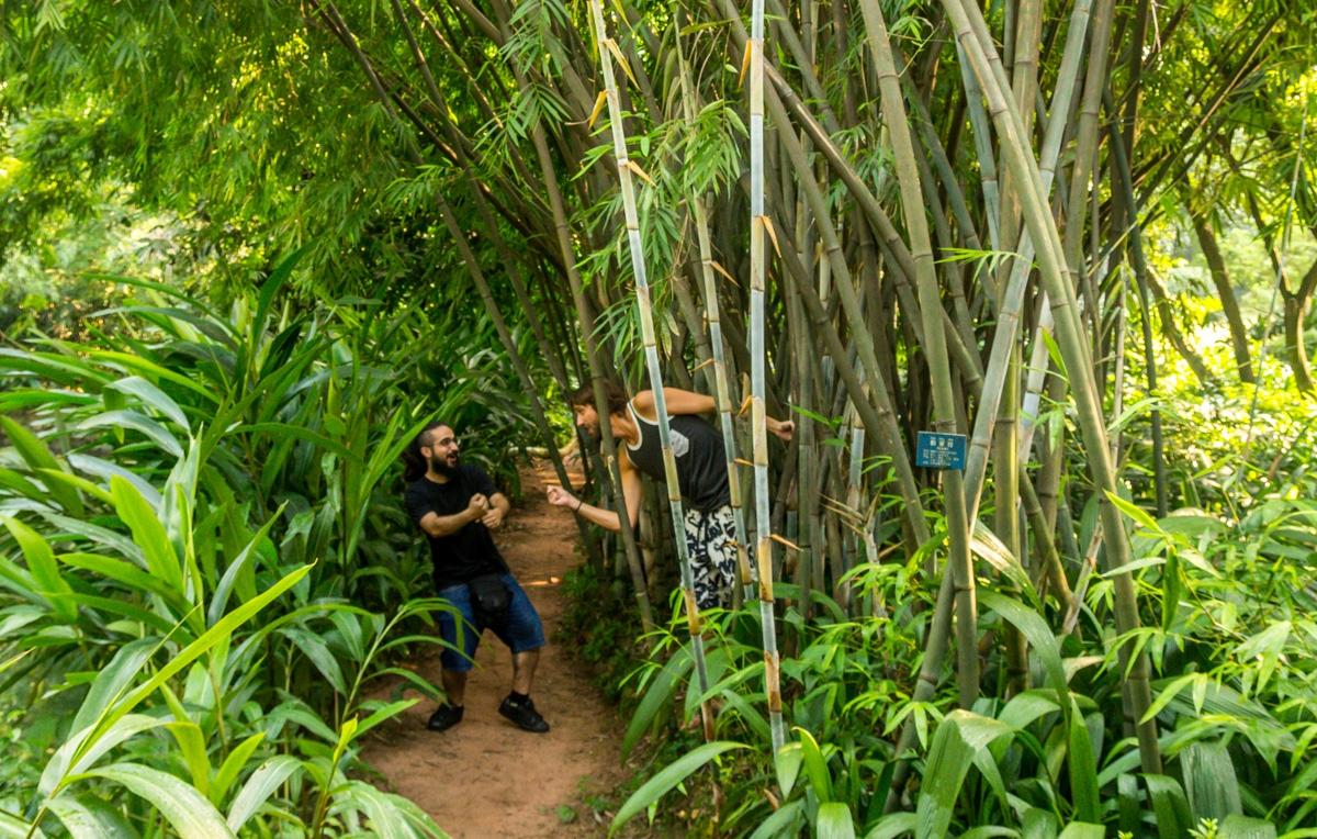 Ninjas en los bambús