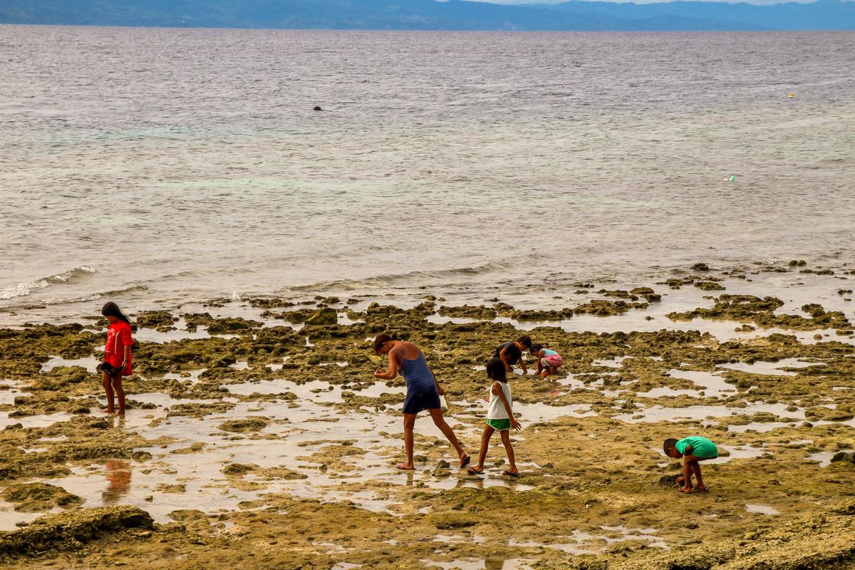 Buscando moluscos