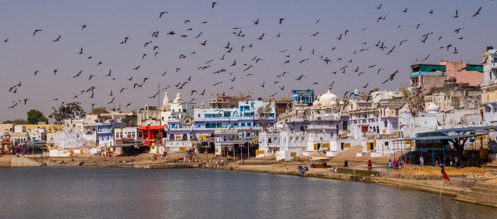 Los pájaros sobre Pushkar