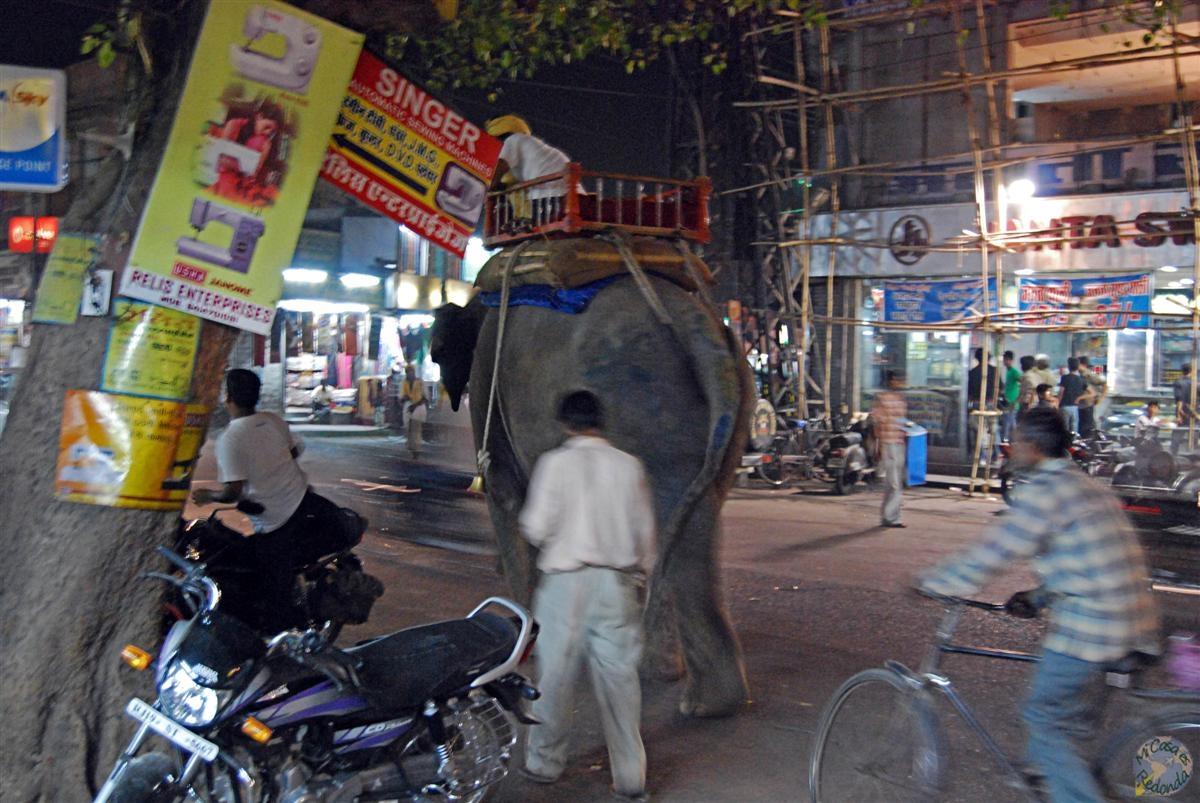 Elefante sin claxon!