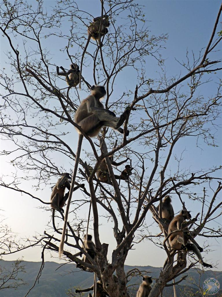 El árbol que da monos