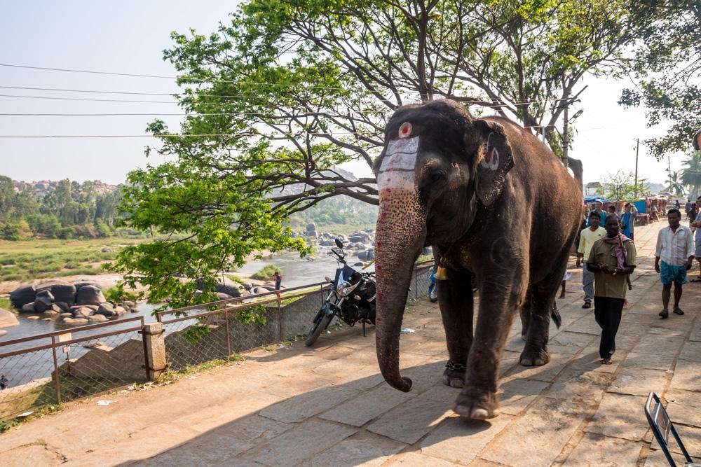 El elefante sagrado que llevan a bañarse al río