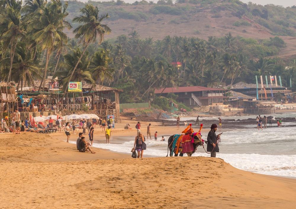 Vacas sagradas en Anjuna, Goa