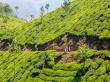 Camino de Munnar después de la jornada
