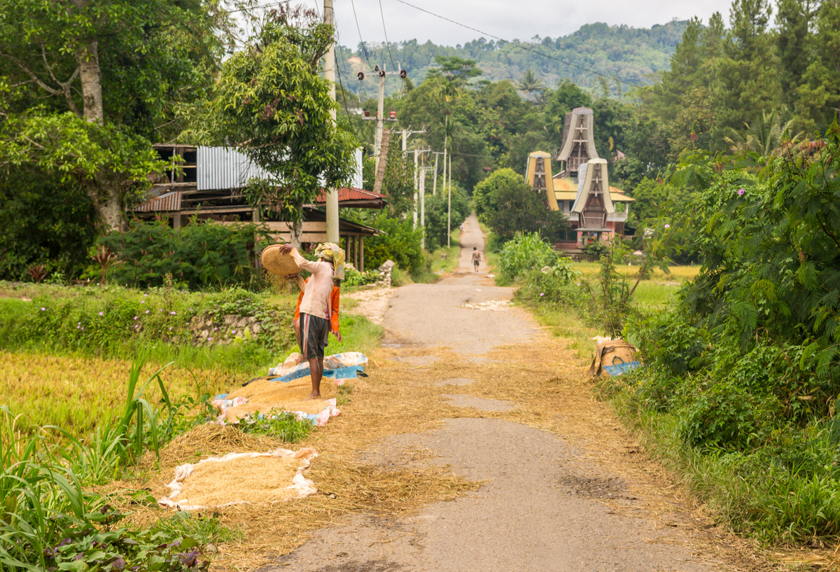 Arrozales, Tana Toraja