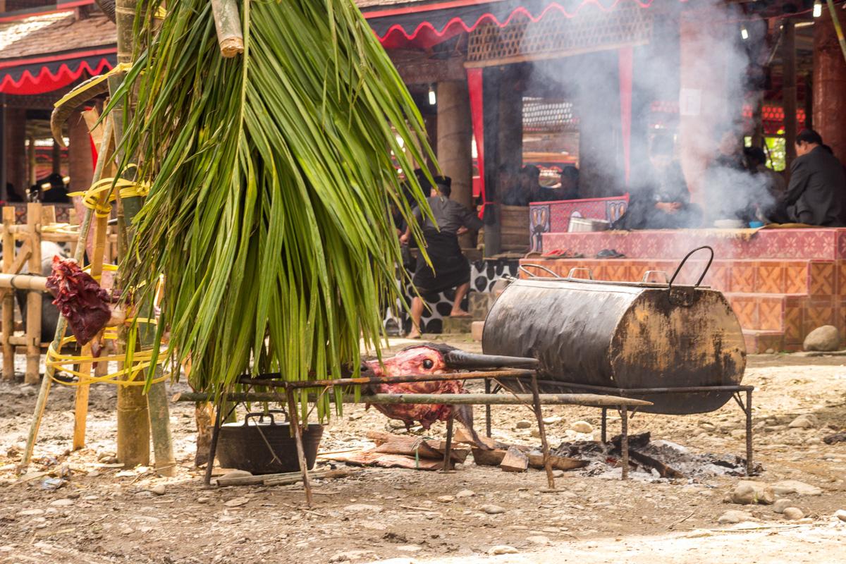 Uno de los búfalos sacrificados, funeral Tana Toraja