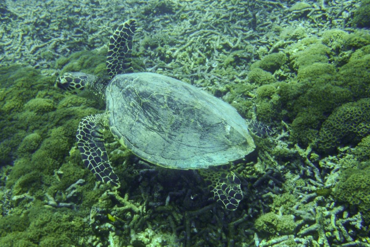 Tortuuu en las Islas Gili