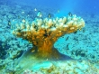 Corales y peces! Gili Air