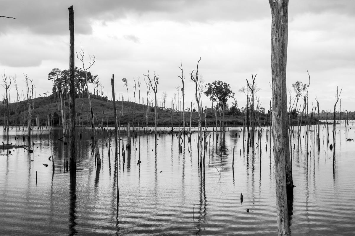Pantanos y troncos muertos en B/N, Thakhek Loop