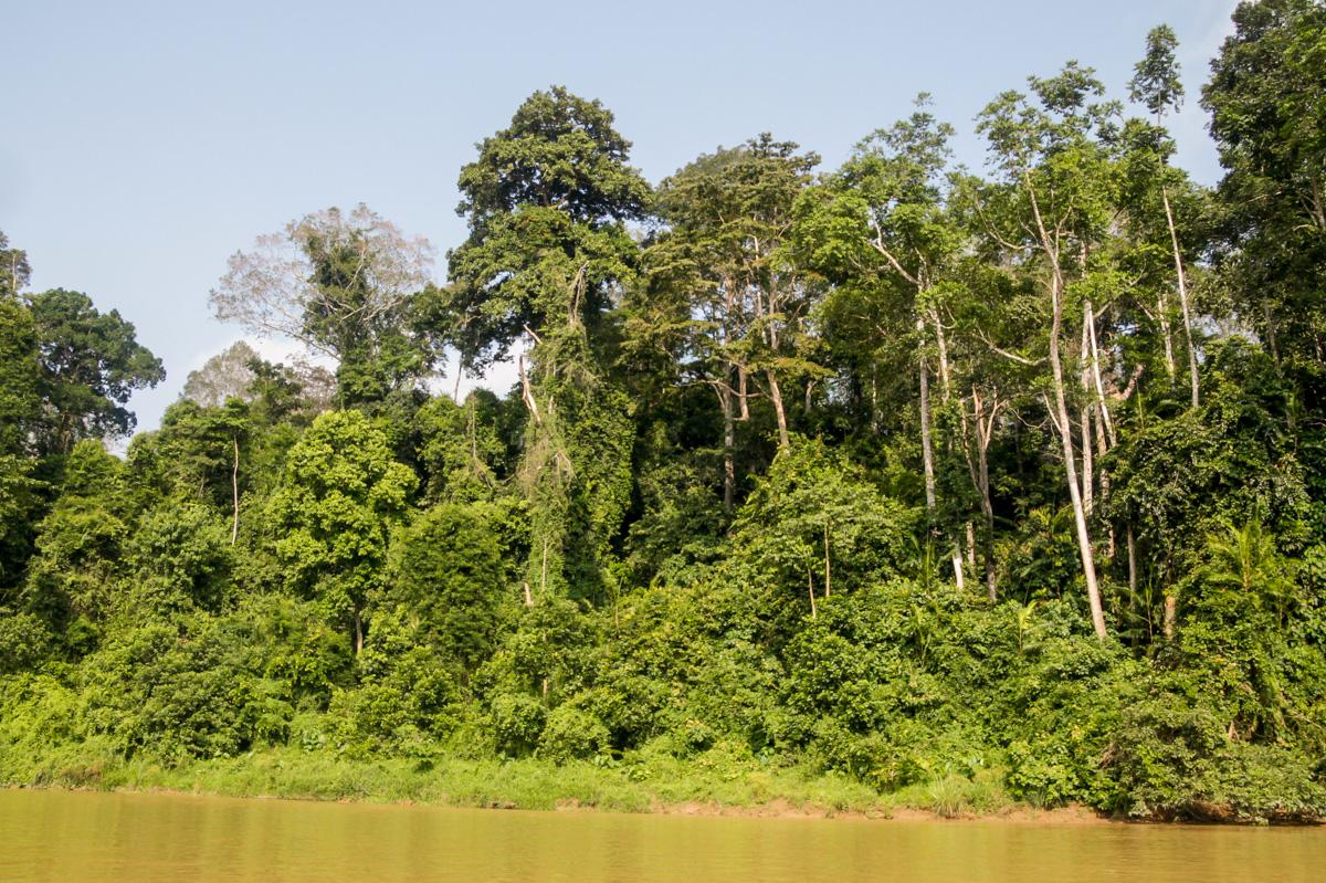 La vuelta en barca, 3 horas por el río con paisajes selváticos, Taman Negara