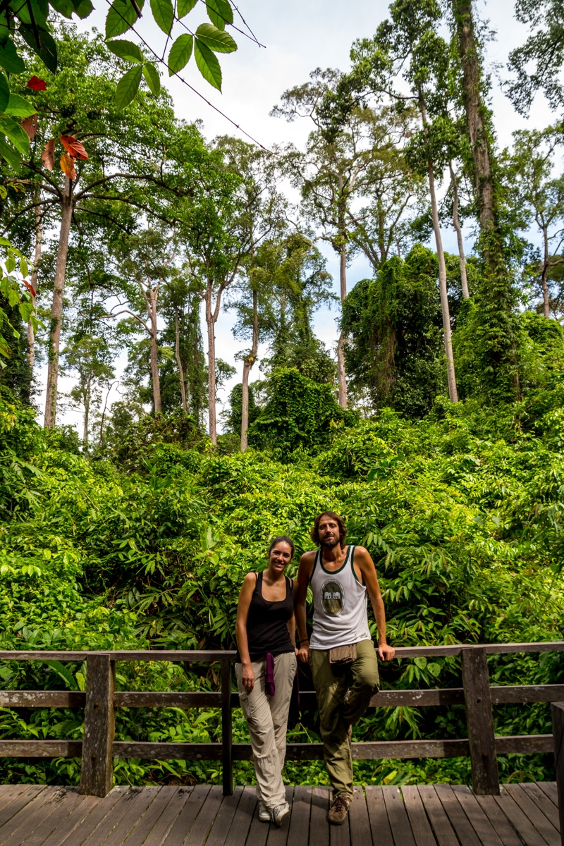 En la reserva de orangutanes, Sepilok