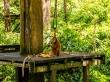 Os veo, os estoy viendo. Reserva de orangutanes de Sepilok