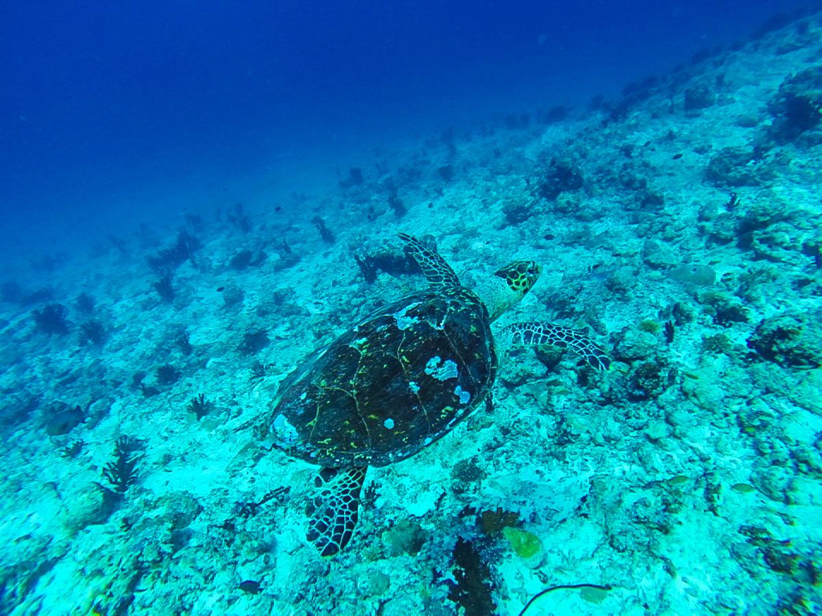 Nuestras amigas las tortugas!