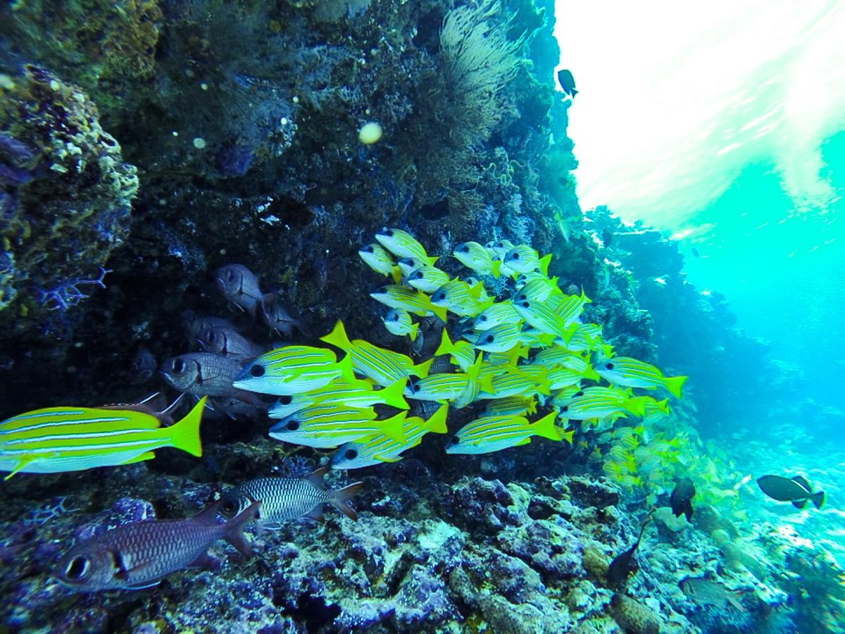 Peces bajo las aguas de Maldivas