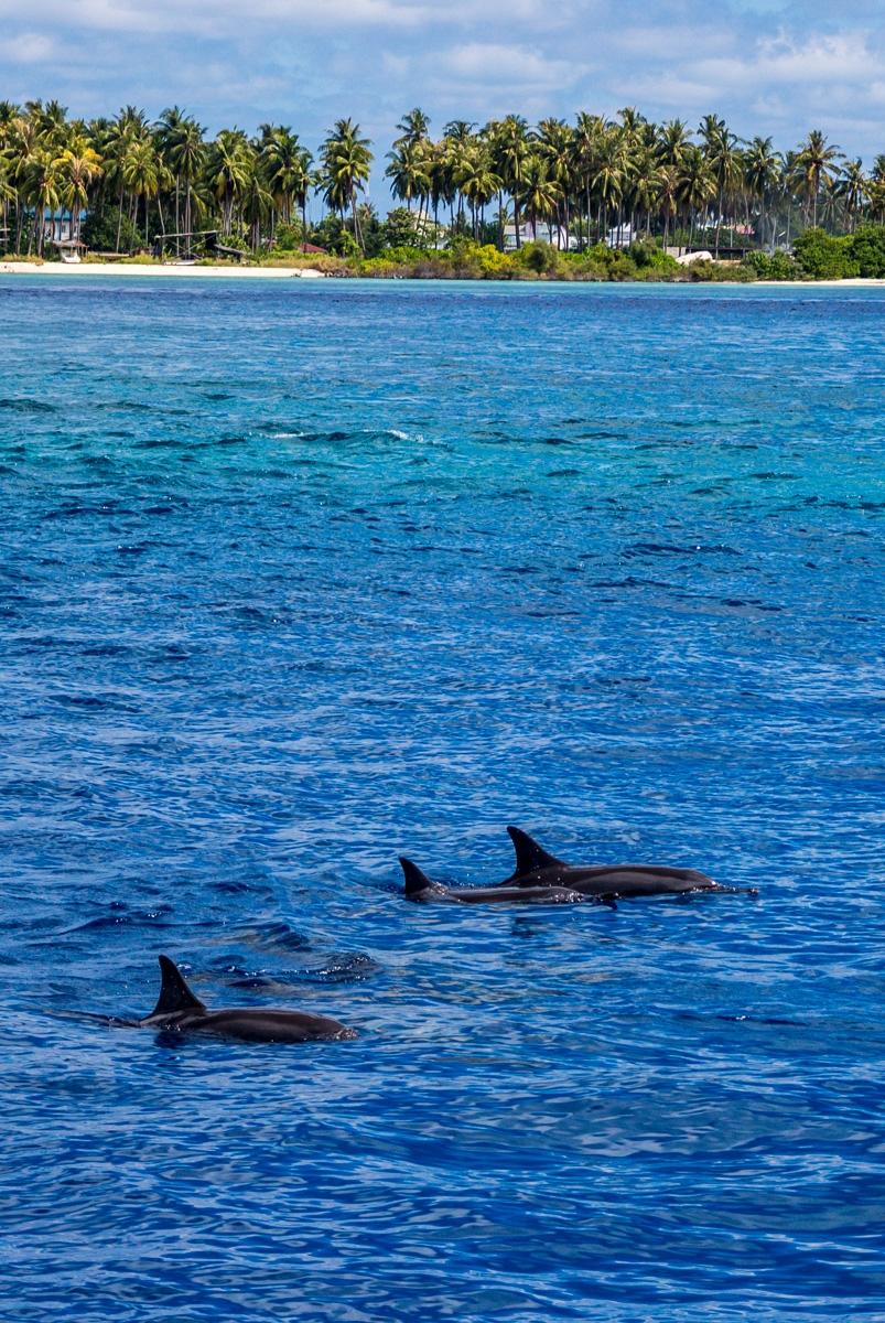 Nos acompañaron muchos delfines!