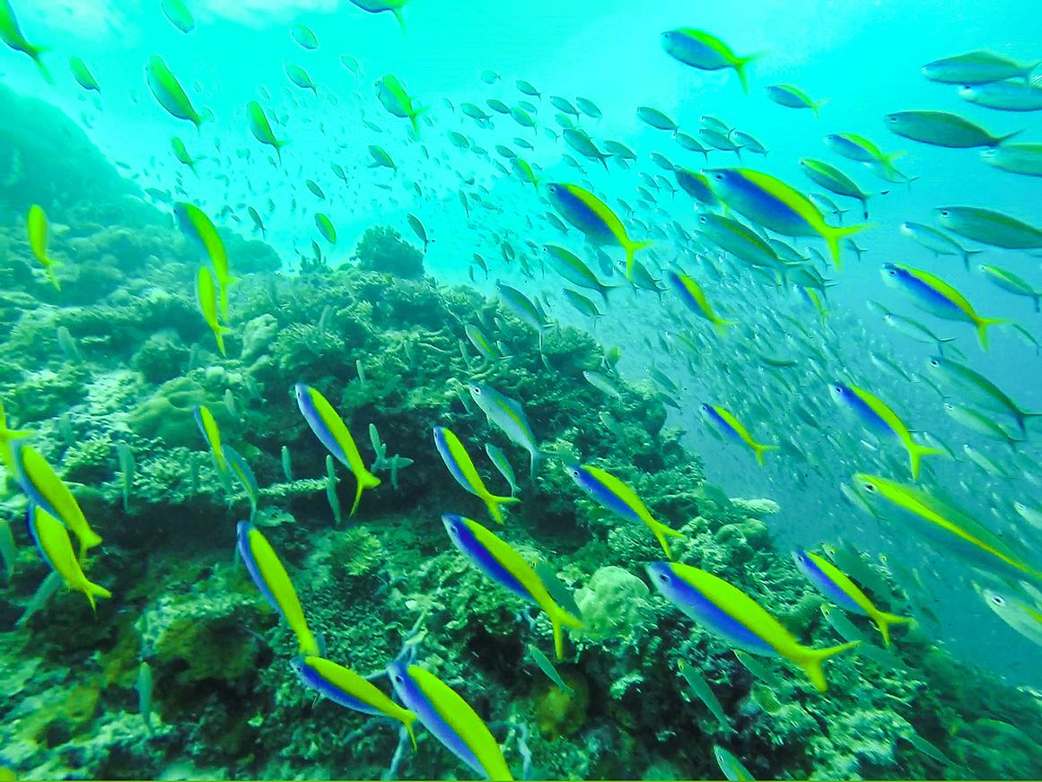 Muchos colores bajo el mar. Guraidhoo, Maldivas