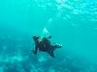 Bajo el mar de Maldivas!