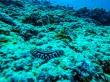 Nudibranquio maldivo