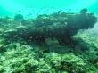 Exuberante vida marina bajo Guraidhoo, Maldivas