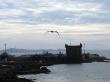 Gaviotas, con la torre al fondo