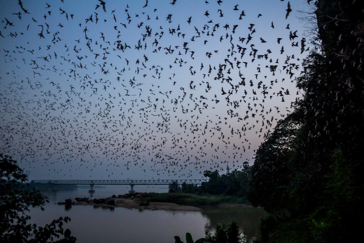 ¡Volad, mis criaturas de la noche!