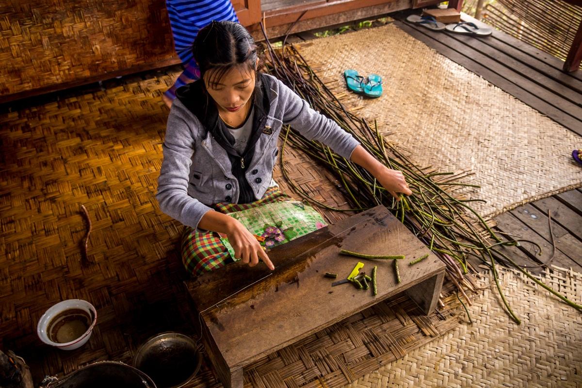 Sacando el hilo del loto para tejer