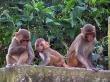 Los monos del Templo de los idem