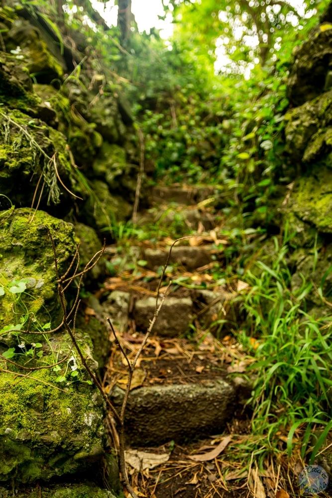 Polhill Reserve