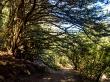 Los árboles acechan, monte Victoria, Wellington