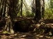 Creéis que es buen escondite contra un Nazgul? en Hobbit's Hideaway Track, Monte Victoria, Wellington