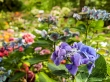 Botanic Garden, Wellington