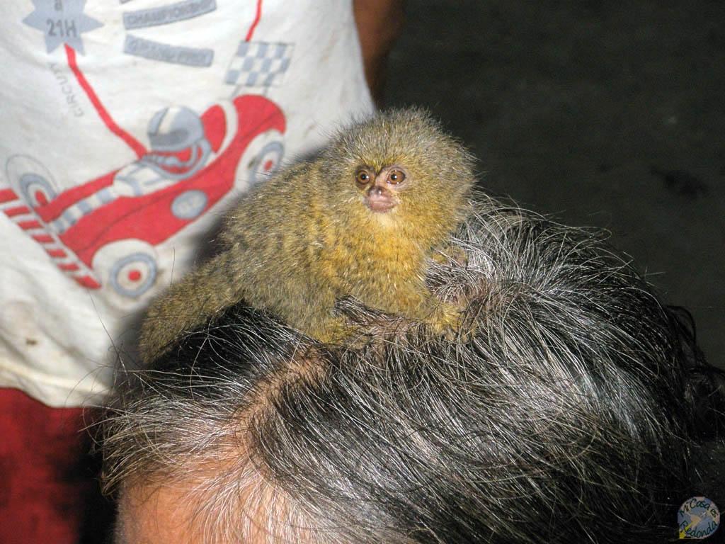 Monete en cabeza de señora, en alguna pequeña comunidad amazónica