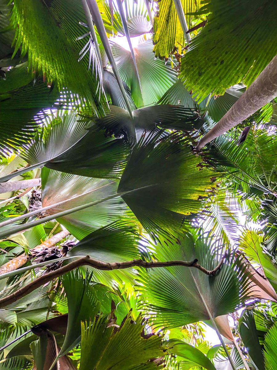 Densa vegetación en el interior de Seychelles