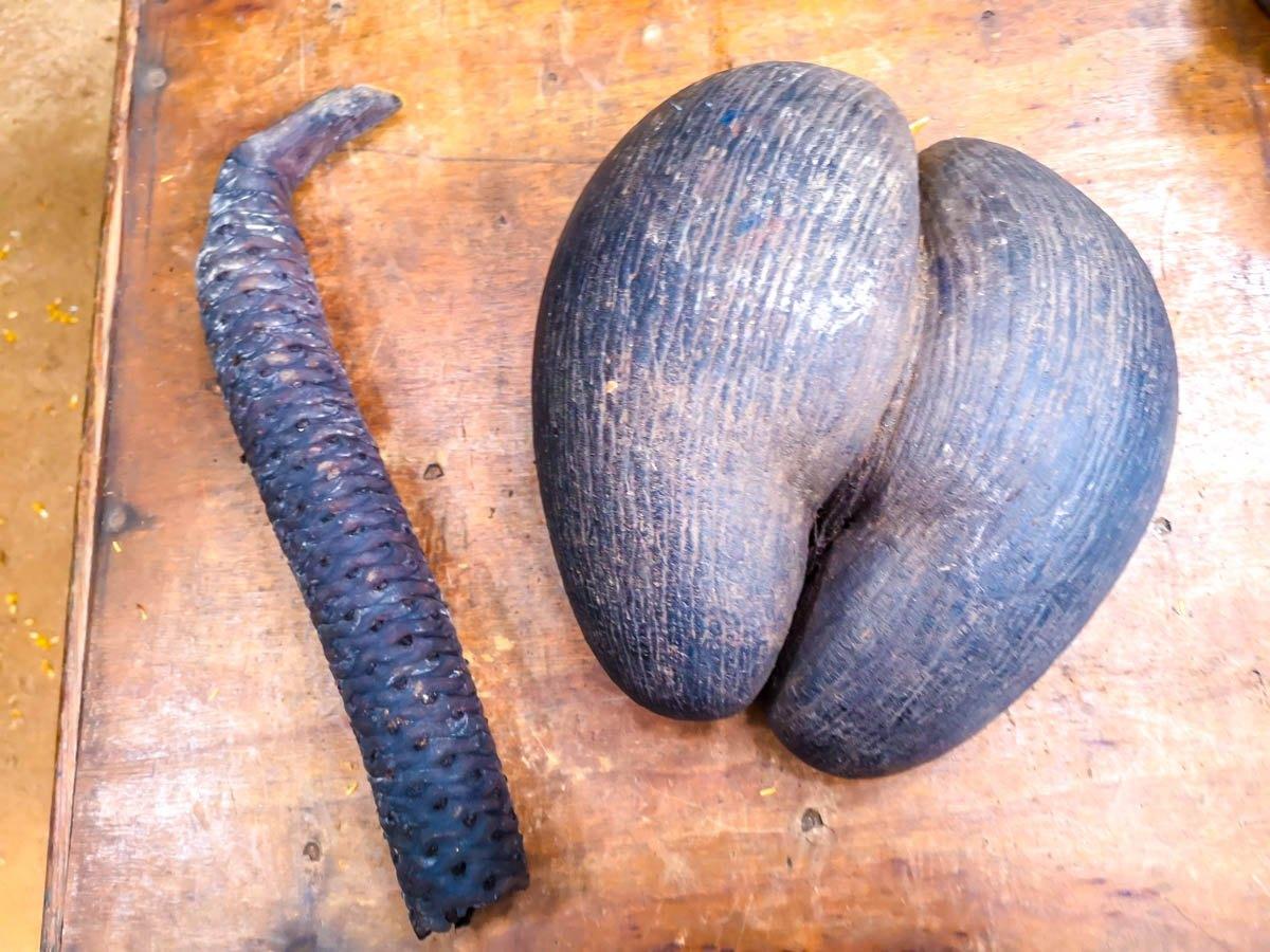 Coco de Mer macho y hembra, Seychelles