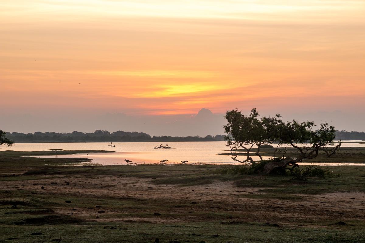 Animalillos correteando al amanecer en Yala