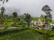 Entre templos y té, Haputale