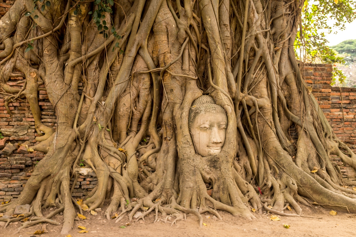 La famosa cabeza en el Wat Maha That, Ayutthaya