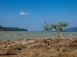 El árbol solitario, Koh Phayam