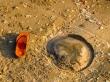 Medusas de Mui Ne